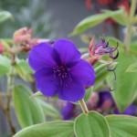 mini-botanique